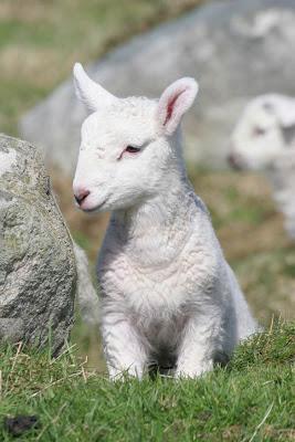 Lamb is a staple in Azerbaijan