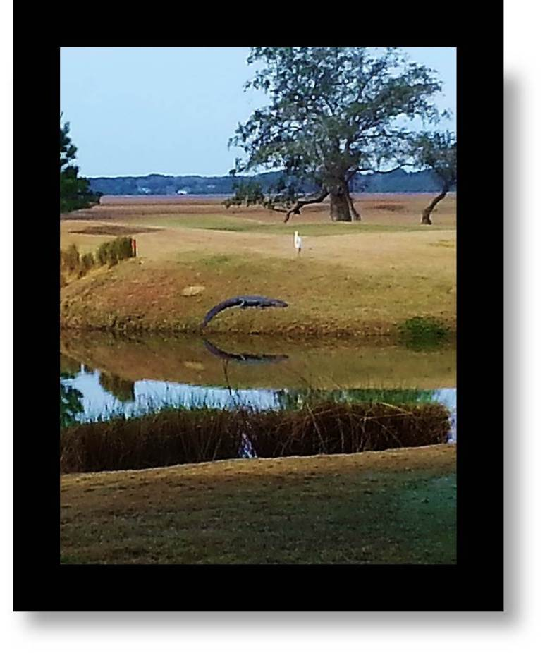 Picture of South Carolina: In Addition To Malaria, Aligators Add To The Challenge of Low Country Living